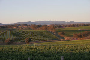 Orange, New South Wales. Foto: Wine Australia